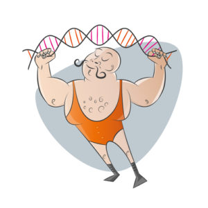 genetics relates to bodybuilding